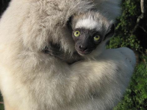 Mission RHUM-RUM Madagascar 2014